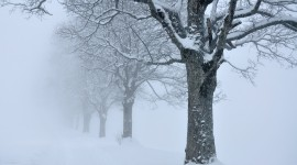 Trees In The Snow Photo Download#1