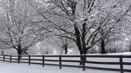 Trees In The Snow Wallpaper Download