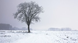 Trees In The Snow Wallpaper Full HD