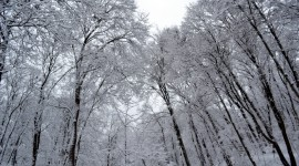 Trees In The Snow Wallpaper Full HD#1