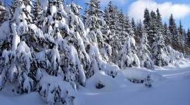 Trees In The Snow Wallpaper Gallery