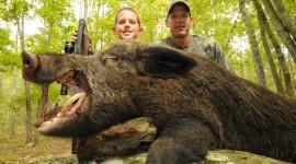 Wild Boar Desktop Wallpaper HD