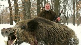 Wild Boar Photo#1