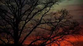 Winter Dawn Desktop Wallpaper HD