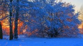 Winter Dawn Wallpaper Full HD
