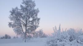 Winter Dawn Wallpaper#1