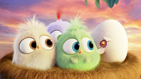 4K Angry Birds wallpapers high quality