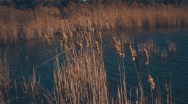 4K Dry Grass Desktop Wallpaper HD