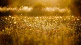 4K Dry Grass Photo Free