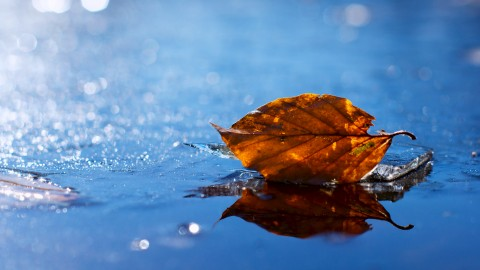 4K Dry Leaves wallpapers high quality