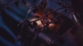 4K Dry Leaves Desktop Wallpaper