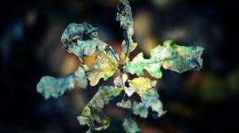 4K Dry Leaves Desktop Wallpaper#2