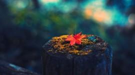 4K Dry Leaves Photo