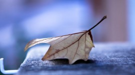 4K Dry Leaves Photo Download