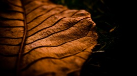 4K Dry Leaves Photo Download#1