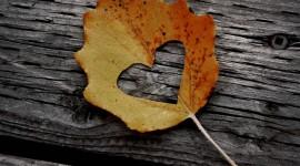 4K Dry Leaves Photo Free