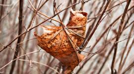 4K Dry Leaves Photo Free#1