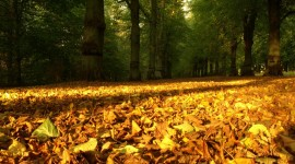 4K Dry Leaves Photo#1
