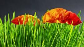 4K Dry Leaves Wallpaper 1080p