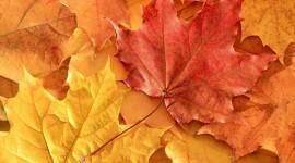4K Dry Leaves Wallpaper 1080p#1