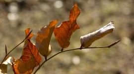 4K Dry Leaves Wallpaper