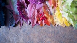 4K Dry Leaves Wallpaper Download