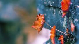 4K Dry Leaves Wallpaper Download Free