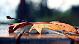 4K Dry Leaves Wallpaper Free