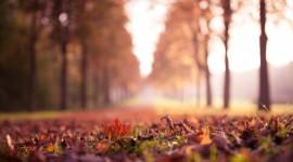 4K Dry Leaves Wallpaper Full HD#1