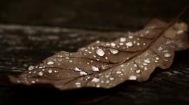 4K Dry Leaves Wallpaper Gallery