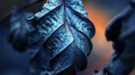 4K Dry Leaves Wallpaper HQ#1
