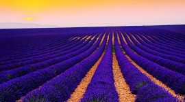 4K Lavender Wallpaper Download Free