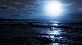 4K Sea Wolf Photo