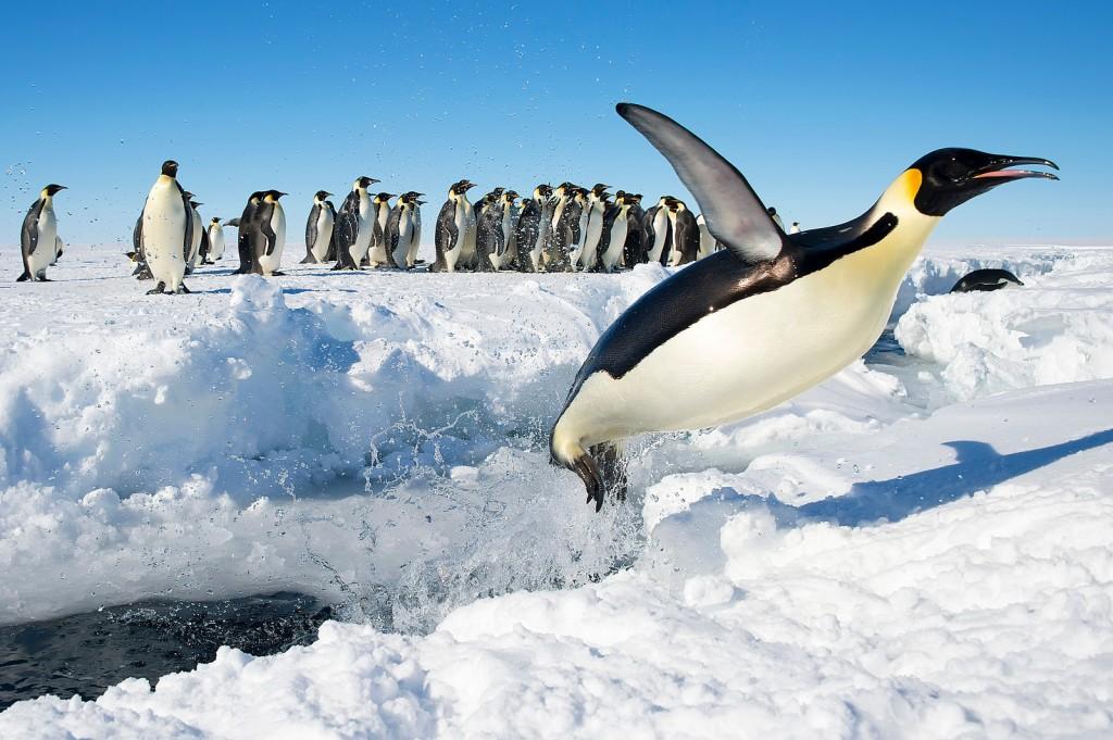 Antarctica wallpapers HD