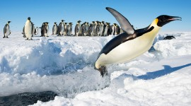 Antarctica Wallpaper Full HD