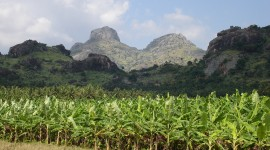 Banana Plantation High Quality Wallpaper