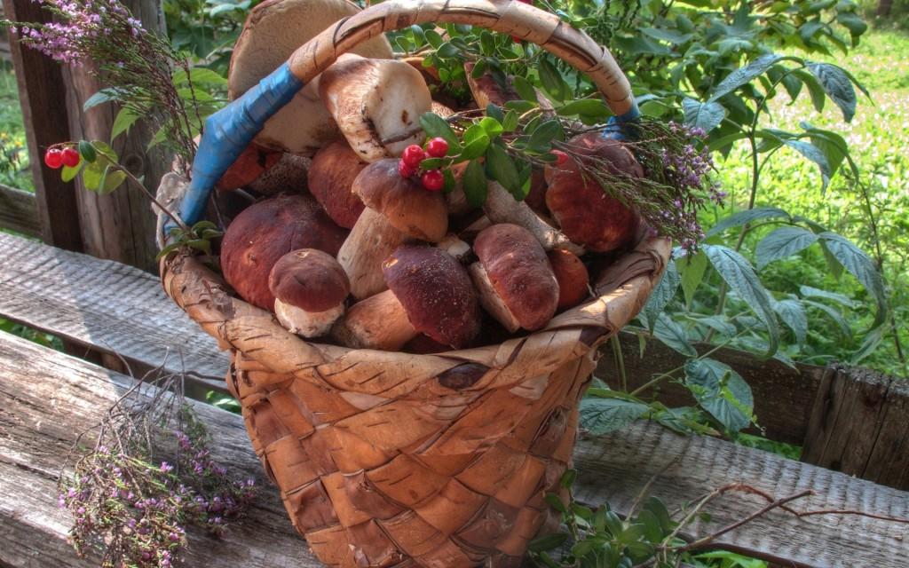 Basket Of Mushrooms wallpapers HD