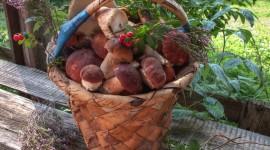 Basket Of Mushrooms Best Wallpaper