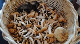 Basket Of Mushrooms Desktop Wallpaper