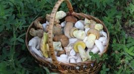 Basket Of Mushrooms Desktop Wallpaper HD