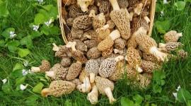 Basket Of Mushrooms Photo