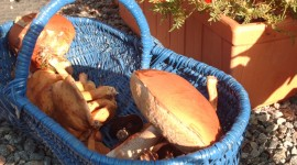 Basket Of Mushrooms Photo Free