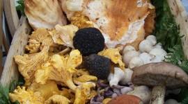Basket Of Mushrooms Wallpaper For IPhone