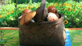 Basket Of Mushrooms Wallpaper For PC