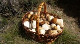 Basket Of Mushrooms Wallpaper Free