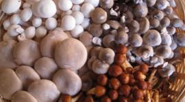Basket Of Mushrooms Wallpaper Full HD