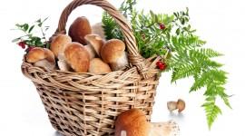 Basket Of Mushrooms Wallpaper Gallery