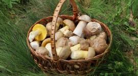 Basket Of Mushrooms Wallpaper HQ