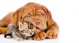 Cat And Dog Friendship Best Wallpaper