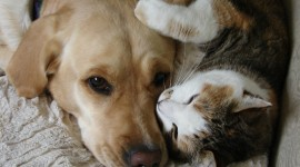 Cat And Dog Friendship Desktop Wallpaper